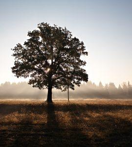 Gees, siel en liggaam: Wat is die verskil?