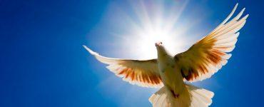 Jesus werk deur die Heilige Gees